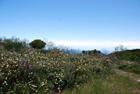 Vendesi Rudere localita' Serro Fico Quattropani Lipari